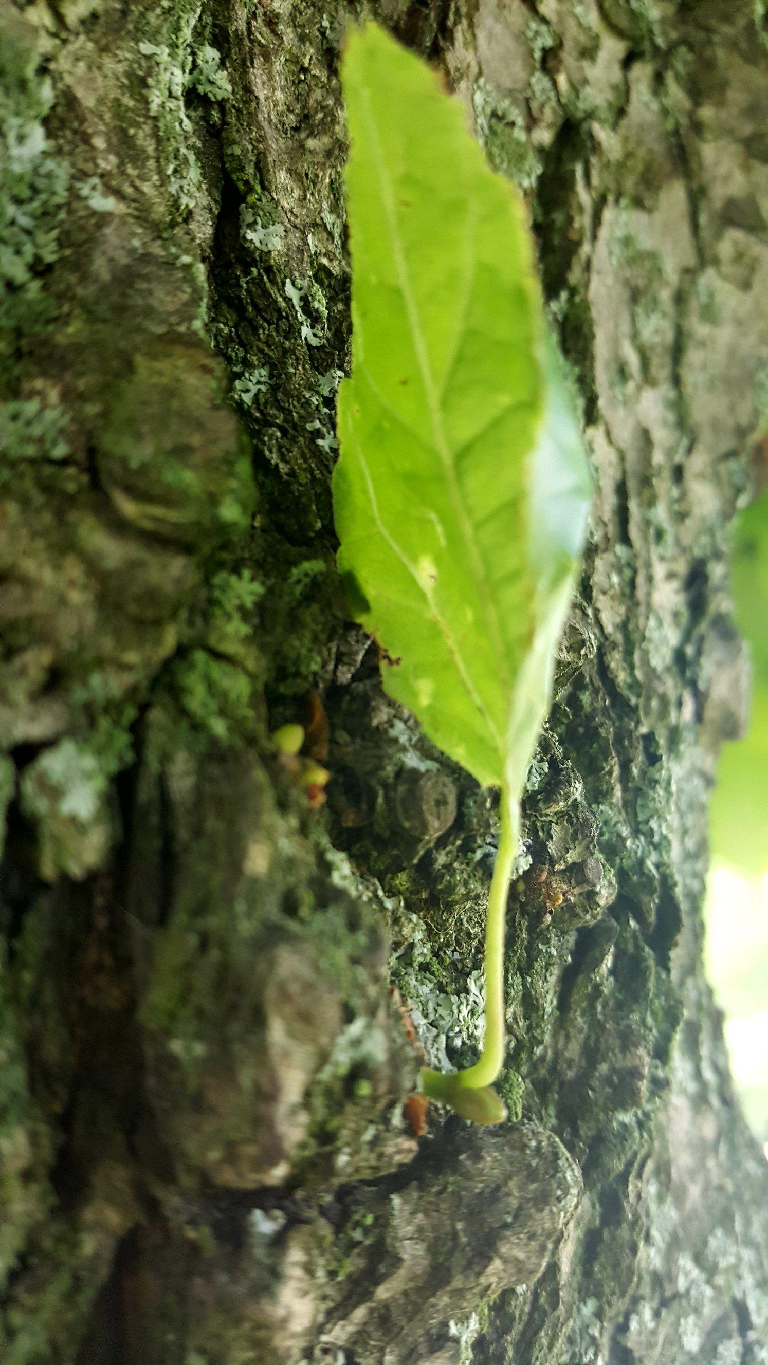 Broto na árvore